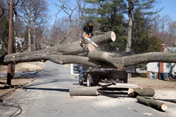 Appropriate Measures to Protected Tree Removal Explained in Most current Article from Precision Tree Services