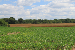 Multi-tract Auction to Provide Kentucky Cropland to the Public